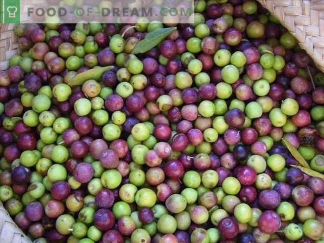 Olives or olives - what is the difference and benefit?