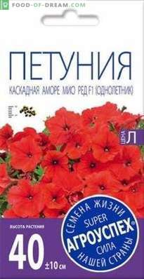 Overview of Amore Mio, a cascade petunia from Agrousp, description and recommendations for ...