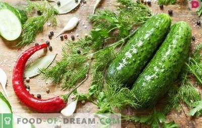 How tasty to make salted cucumbers? Variants of salted cucumbers with oak bark, horseradish, lemon, mint, vinegar and bread