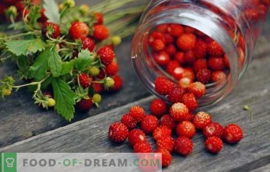 Strawberries, rubbed with sugar for the winter is stored for six months. Wild strawberries with sugar for the winter: how to do it right?