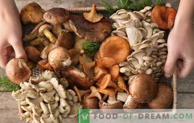 Don't like mushrooms? Just do not know how to cook them! Mistakes cooking mushrooms