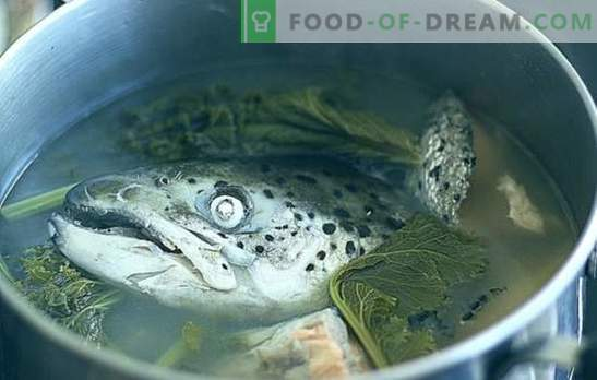 Fish heads soup - recipes and cooking subtleties. Soups from fish heads with rice, millet, vegetables