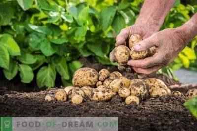 """Taboo TRIO"" - safe pre-sowing prevention of potato diseases and pests"
