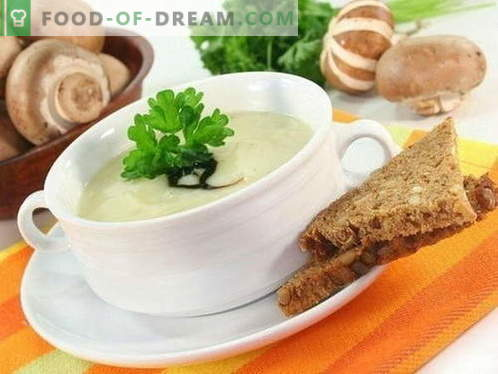 Mushroom soup - the best recipes. How to properly and tasty cook mushroom soup.