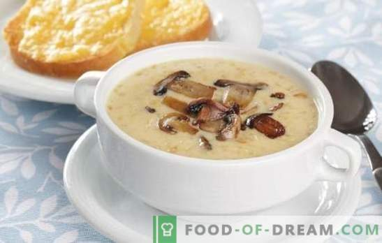 Cheese soup with champignons - surprise home unusual dinner. Recipes for cheese soup with mushrooms: read and cook!
