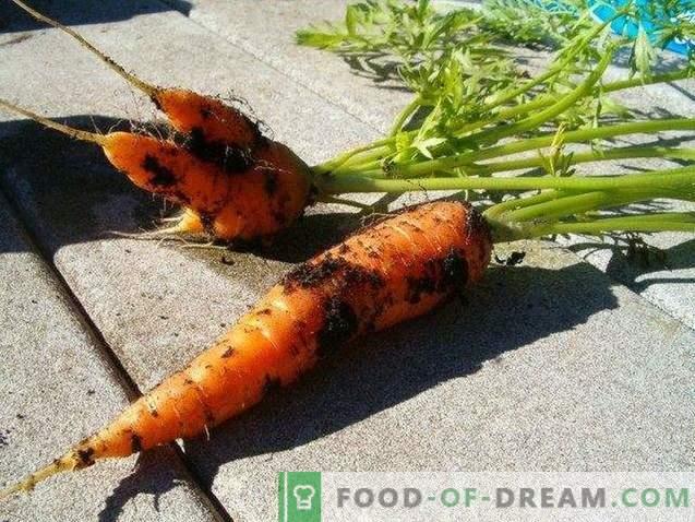 Useful properties of carrots