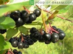 How to dry black chokeberry