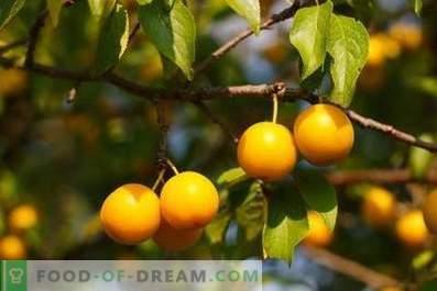 Cherry plum wine