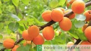 Apricots: health benefits and harm